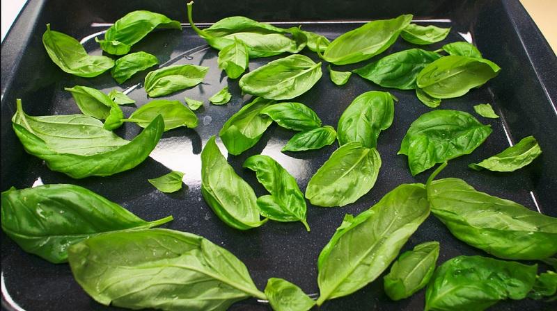 Цілющі рослини: базилік