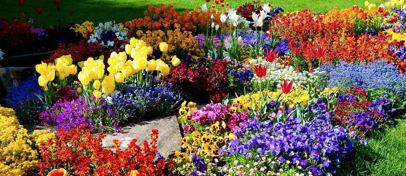Клумба безперервного цвітіння