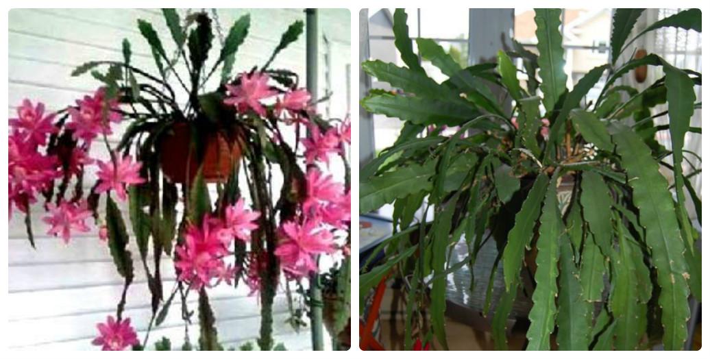 collage_lisovi_kaktusi1.jpg (167.9 Kb)