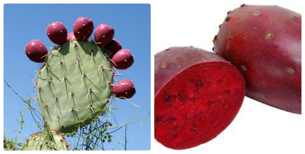 collage_plodi_kaktusa.jpg (126.29 Kb)