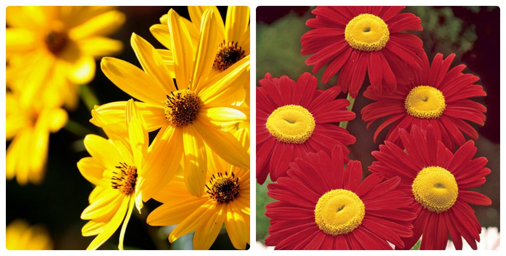 collage_romashka3.jpg (182.19 Kb)