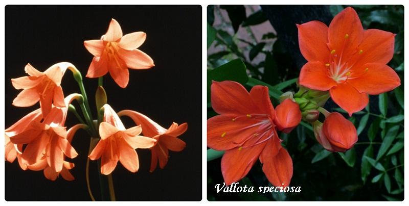 collage_vallota2.jpg (102.14 Kb)