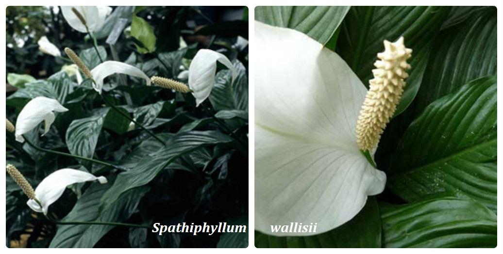 collage_vidi_spatifilluma2.jpg (137.63 Kb)