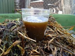 compost-tea.jpg (13.13 Kb)