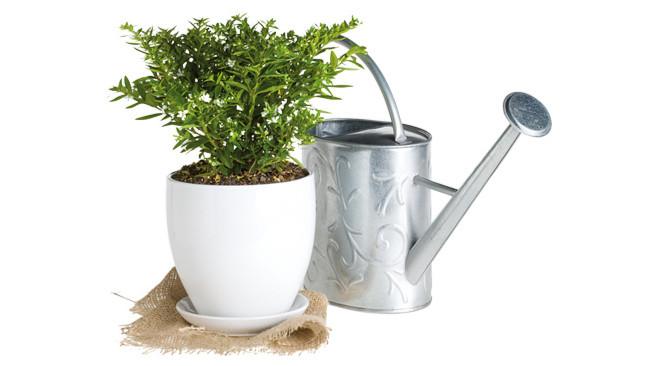 Догляд за рослинами в контейнерах