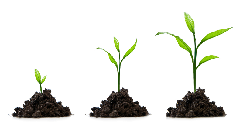 Cтимулятори  росту рослин - фітогормони