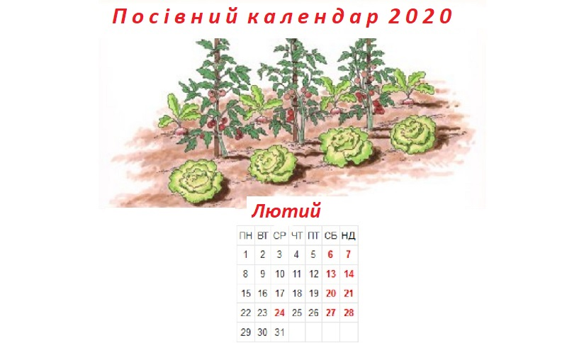 Посівний календар на лютий 2020 року