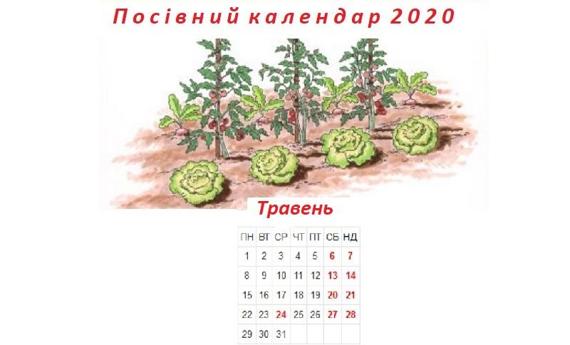 Посівний календар на травень 2020 року