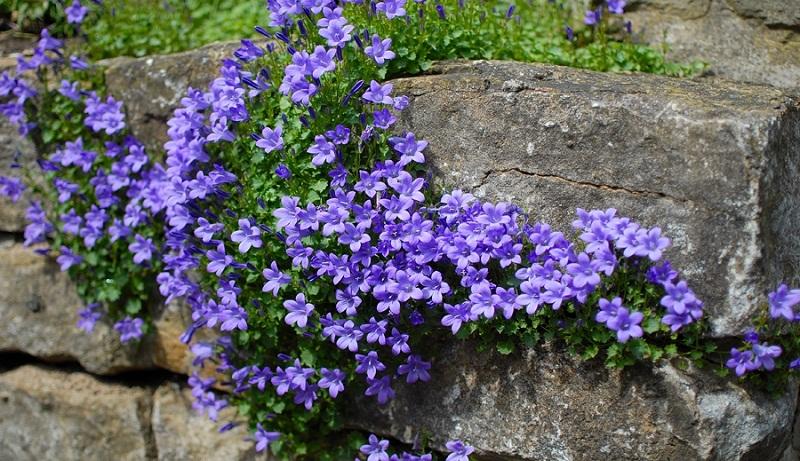10 ідей використання каміння в саду