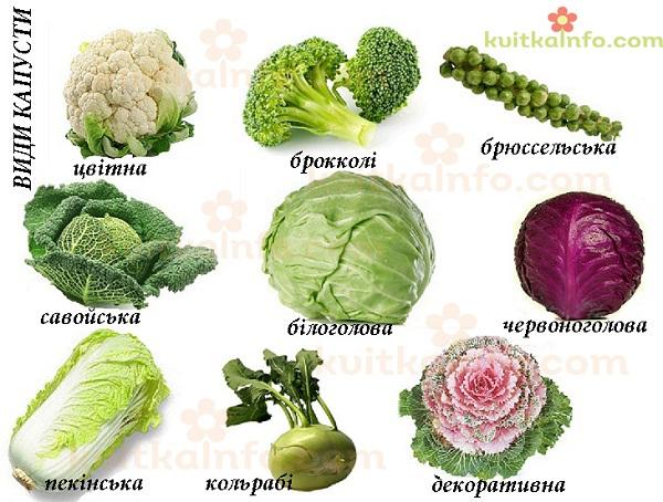 kapusta_kopiya.jpg (139.51 Kb)