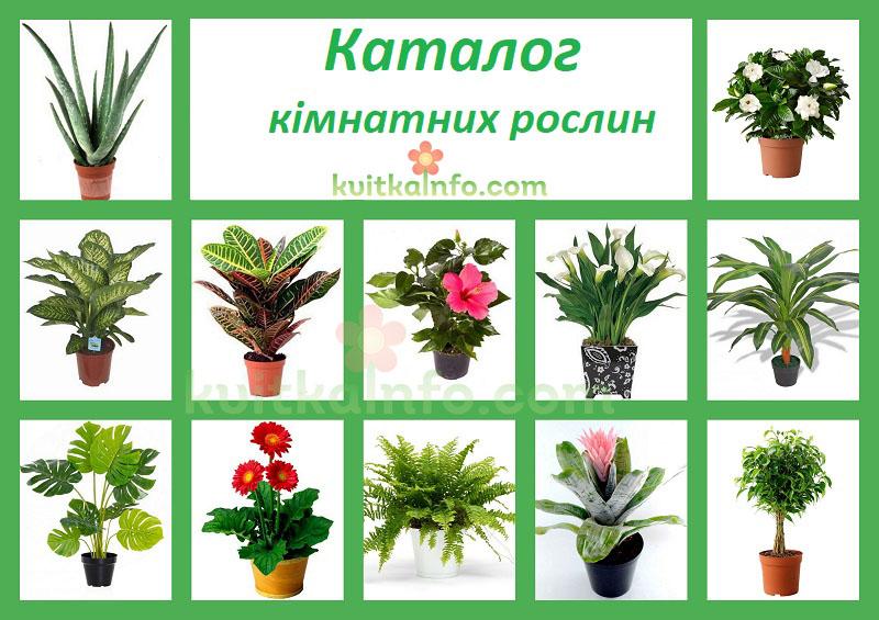 Каталог кімнатних рослин