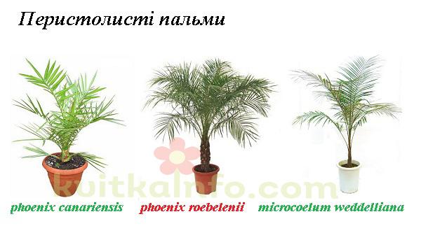 kolazh_peristolisti_palmi1_kopiya.jpg (89.27 Kb)