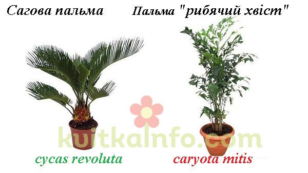 kollazh_palmi_vagovi_kopiya.jpg (84.42 Kb)