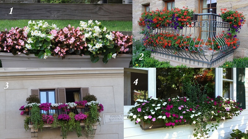 kviti_na_balkoni3.jpg (206.16 Kb)
