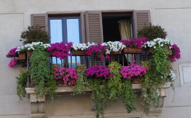 Які квіти посадити на балконі