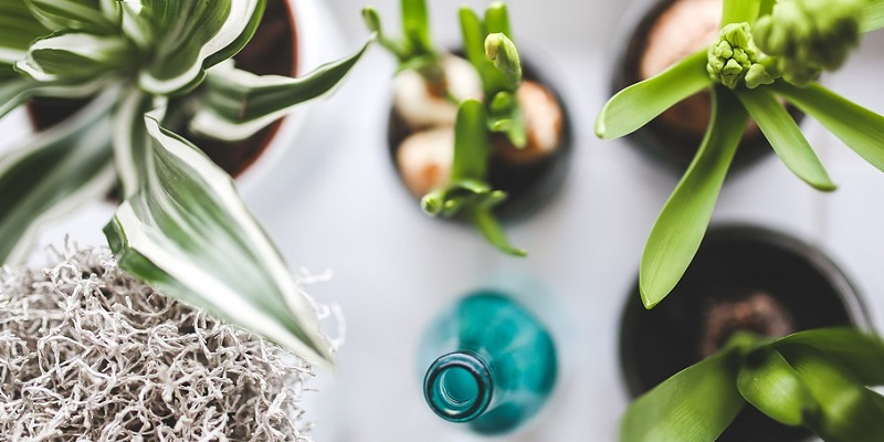 Кімнатні рослини — чудовий спосіб познайомити малюка з природою
