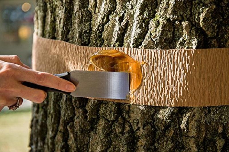 Липкий пояс на дерева власноруч