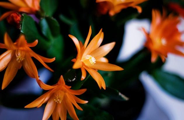 lisovi_kaktusi1.jpg (68.34 Kb)