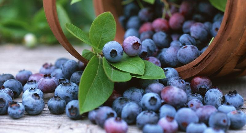 Лохина: вирощування та догляд