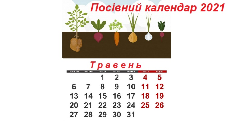 Посівний календар на травень 2021 року