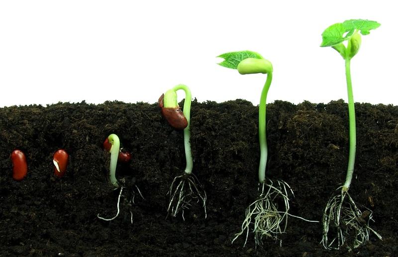 Роль насіння в нашому житті