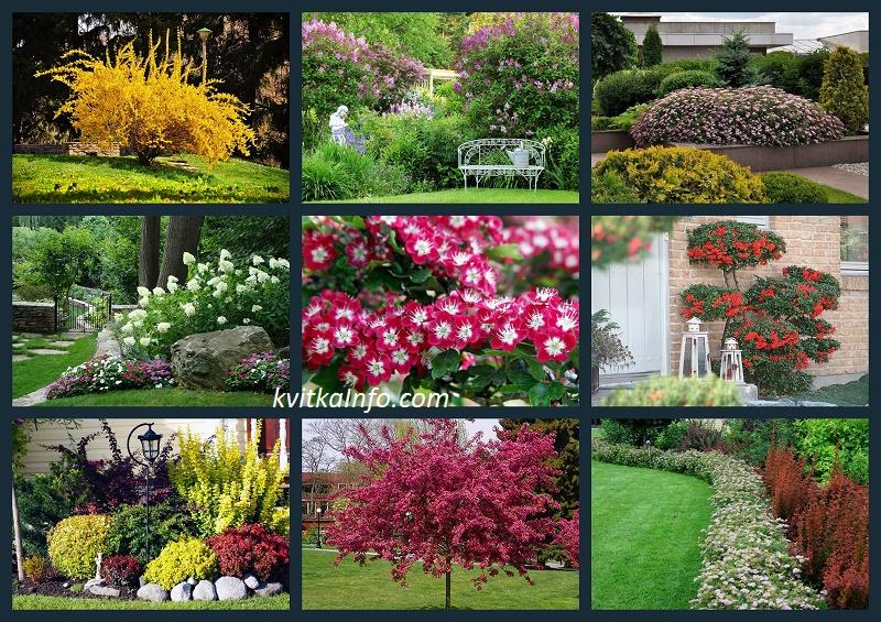 Невибагливі квітучі кущі, які варто посадити в себе на ділянці