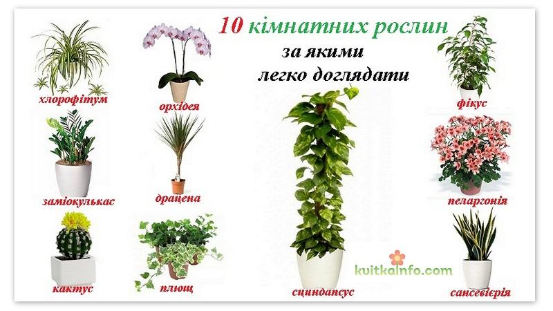 Кімнатні рослини за  якими легко доглядати