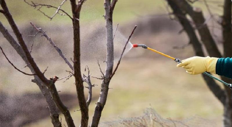 Обприскування плодових дерев