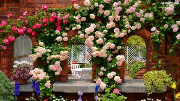 Як змусити плетисту троянду рясно цвісти