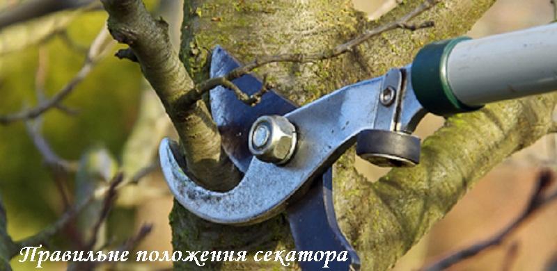 obryzka_derev12.jpg (142.31 Kb)