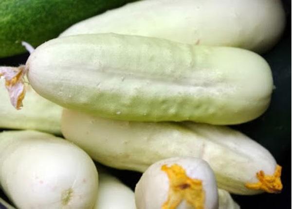 Огірок сорту «Білий ангел»