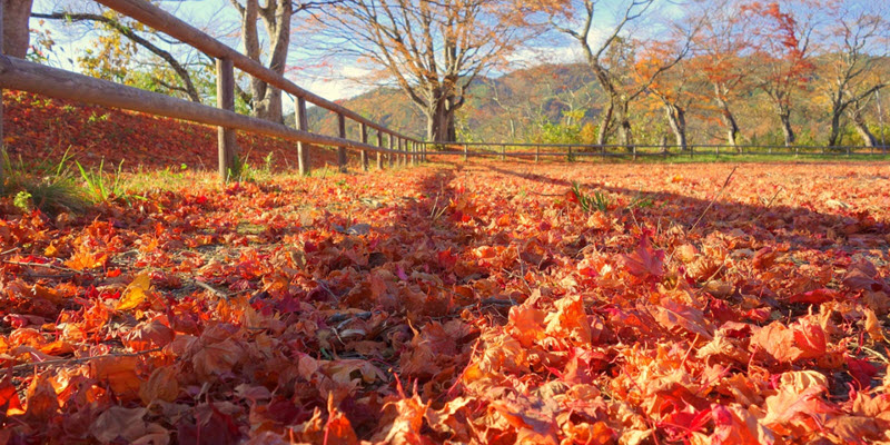 Що робити з листям, яке зібрали на ділянці