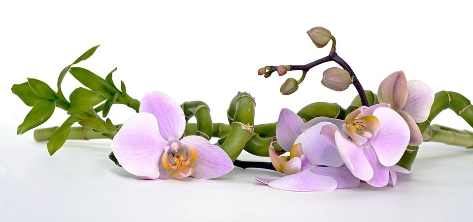 5 різновидів орхідеї, які ідеально підходять для квартир українців