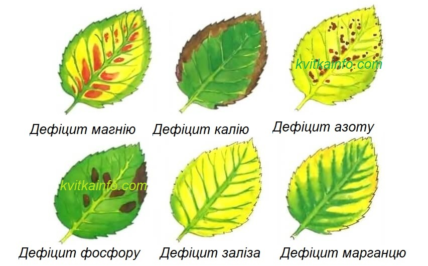 Ознаки дефіциту поживних речовин у рослини