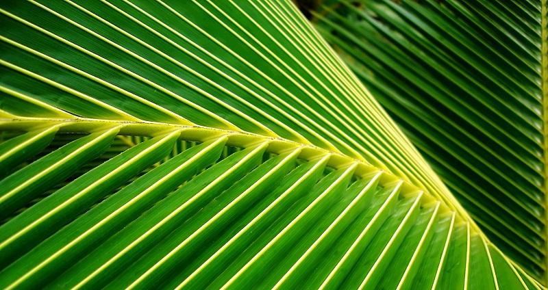 Пальми: види та догляд