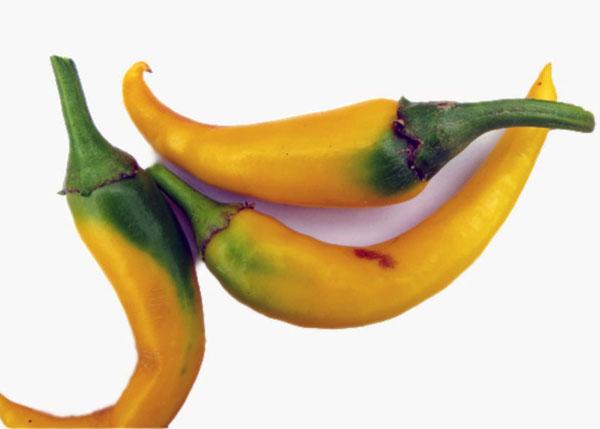 Перець сорту «Румунський жовтий»