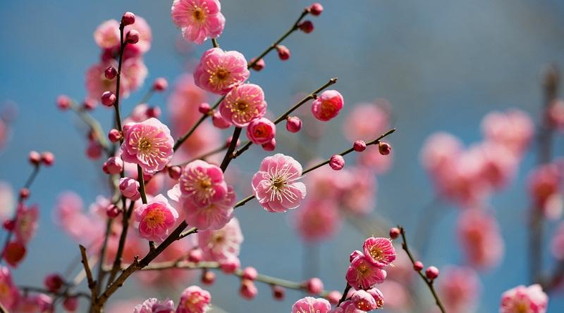 Підготовка дерев до весни