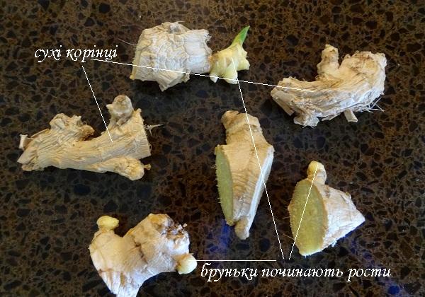 pidgotovka_korinnya_imbiru.jpg (131.85 Kb)