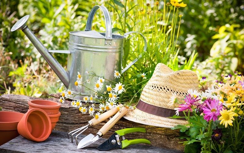 Підготовка саду до весни