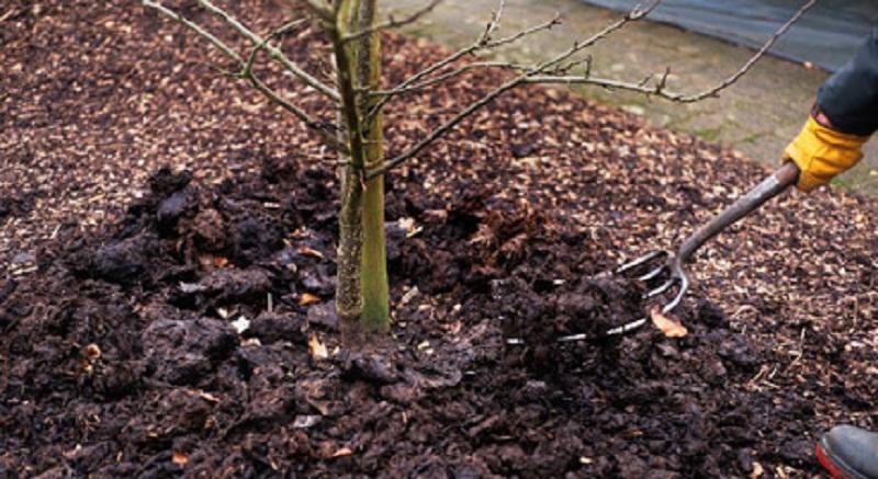 Як та чим підживляти сад восени
