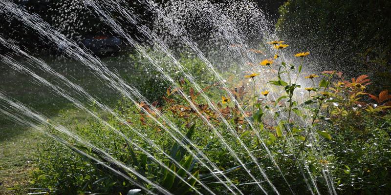 Системи поливання рослин: Дощувальна