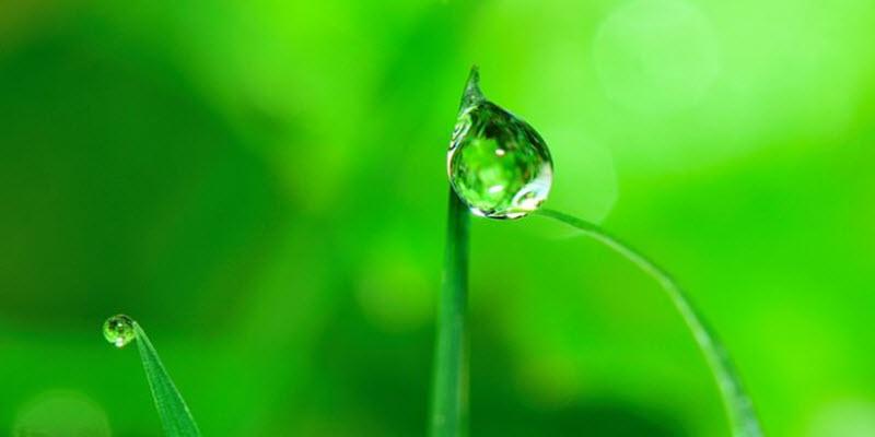 Системи поливання рослин: Крапельна