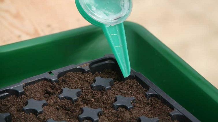 Як сіяти дрібне насіння. 4 способи