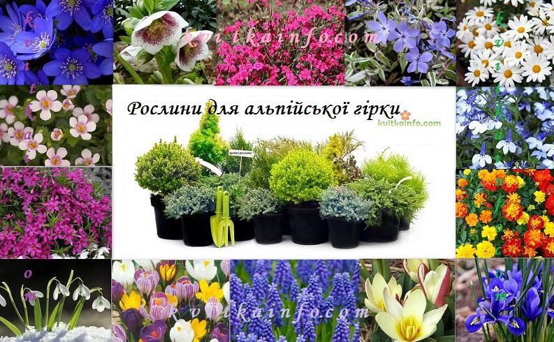 Рослини для альпійської гірки