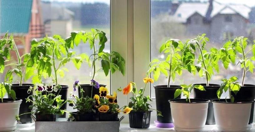 Розширюємо підвіконня і насолоджуємося природою вдома
