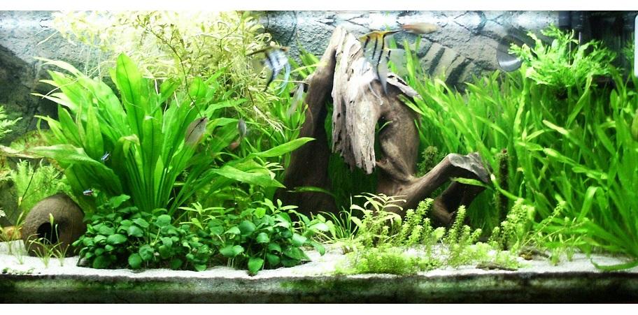 5 найбільш невибагливих акваріумних рослин