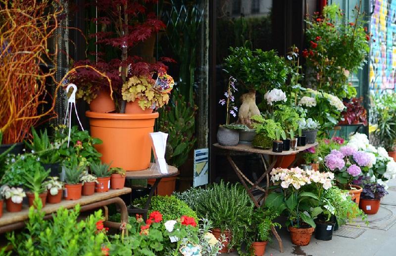 Як вибрати рослини у магазині