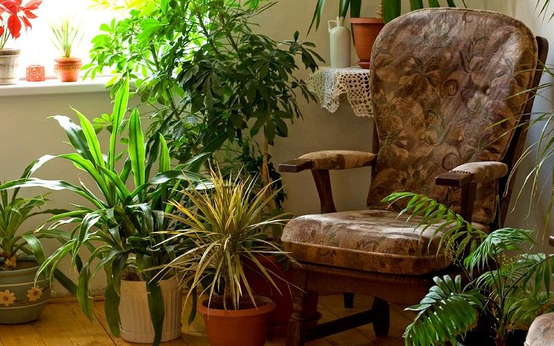 Кімнатні рослини як захист від вірусів