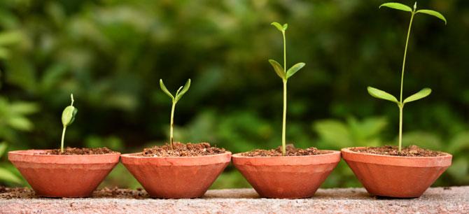Розмноження рослин насінням та спорами