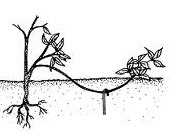 rozmnoyenna-vidvodcamu2.jpg (7.44 Kb)
